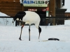 asahiyama-zoo-15