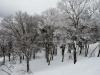 snow-monsters-at-mountain-zao-yamagata-15