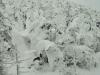 snow-monsters-at-mountain-zao-yamagata-6